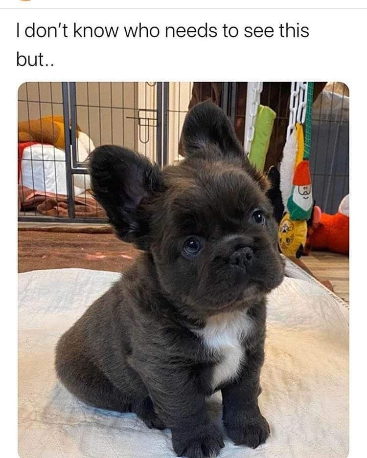 Who Loves This Doggy In 2020 Cute Puppies Cute Animals Cute Dogs