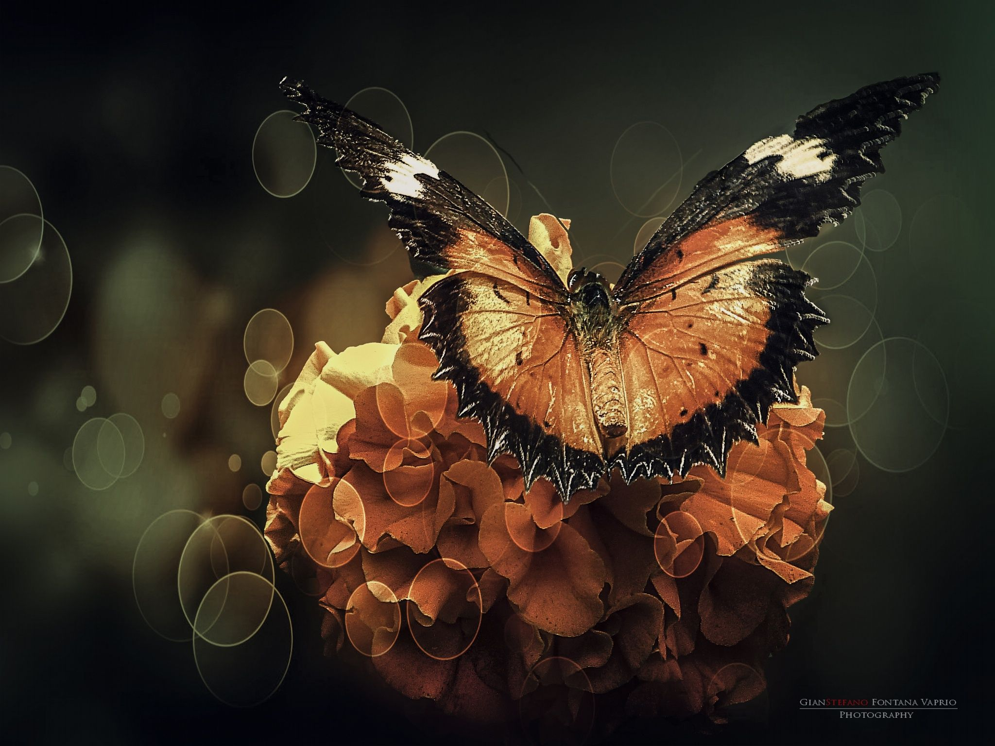 Butterfly's world II by Gianstefano Fontana Vaprio on 500px