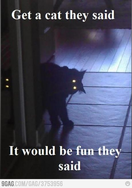 It Would Be Fun They Said Funny Pictures Scary Cat Funny Animal Pictures