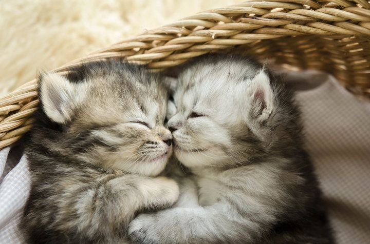 When A Kitten Is Born There Are A Series Of Good And Bad Developments That Occur Especially When Kittens Open Their Eyes Fo Kitten Cuddle Cats Sleeping Kitten