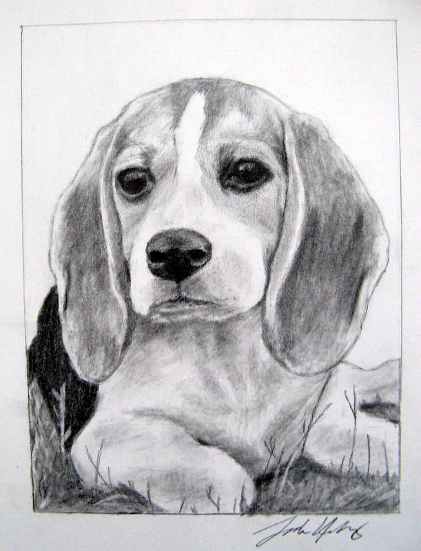 Dog Drawing Beagle Puppy By Sarah Holloway Beagle Art Dog