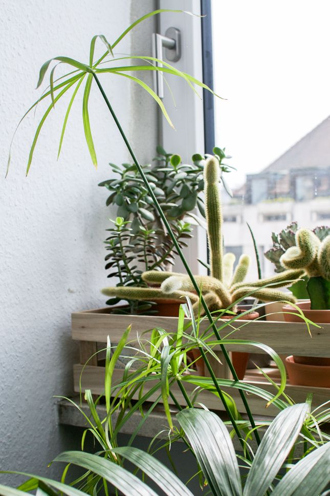 Urban Jungle Bloggers: Plants & Glass · Happy Interior Blog