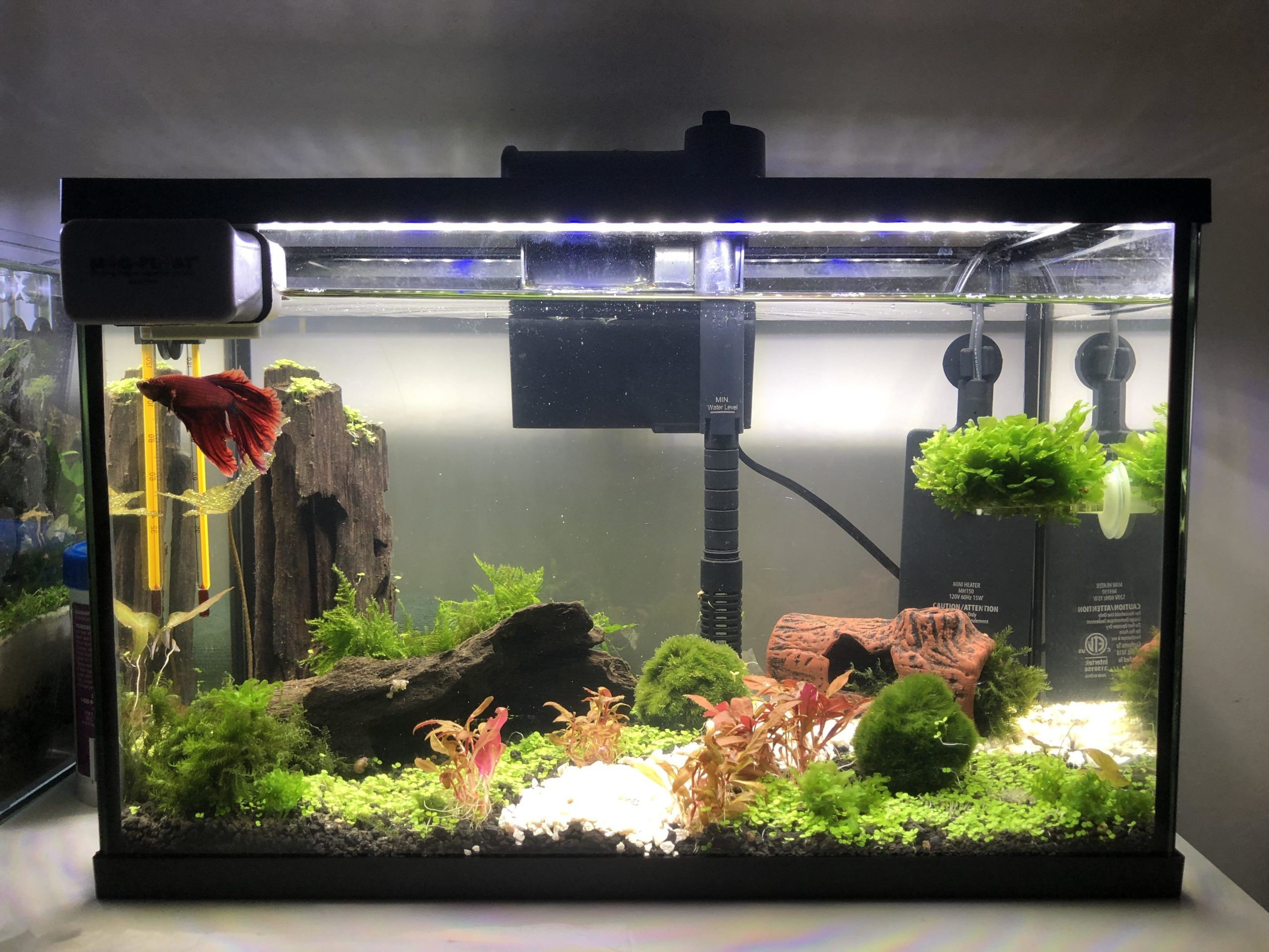 Pin On All About Fish Tanks Aquariums