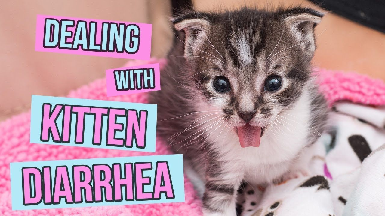How To Deal With Kitten Diarrhea The Kitten Lady Kitten Care Kitten Rescue Kitten