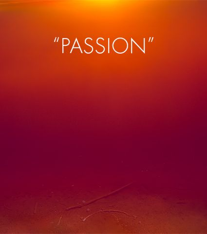 Passion Quotes Favorite Quotes On Passion  Things To Remember  Pinterest  Tony
