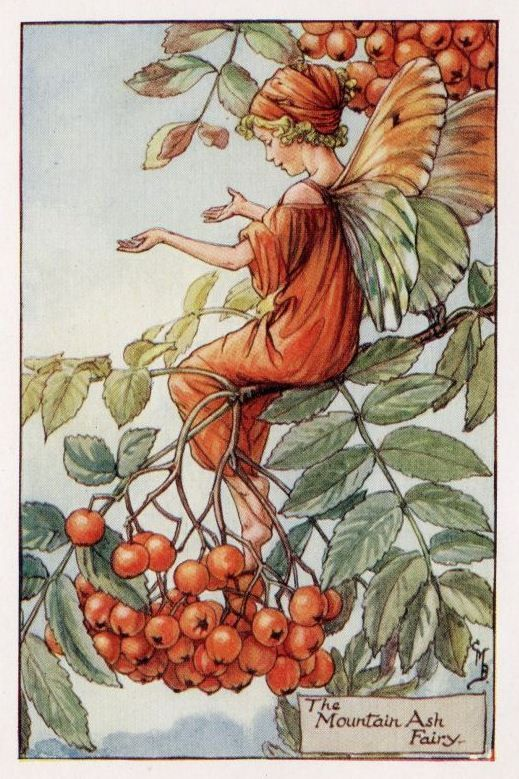 ''Mountain Ash Flower Fairy'', c.1927, by Cicely Mary Barker