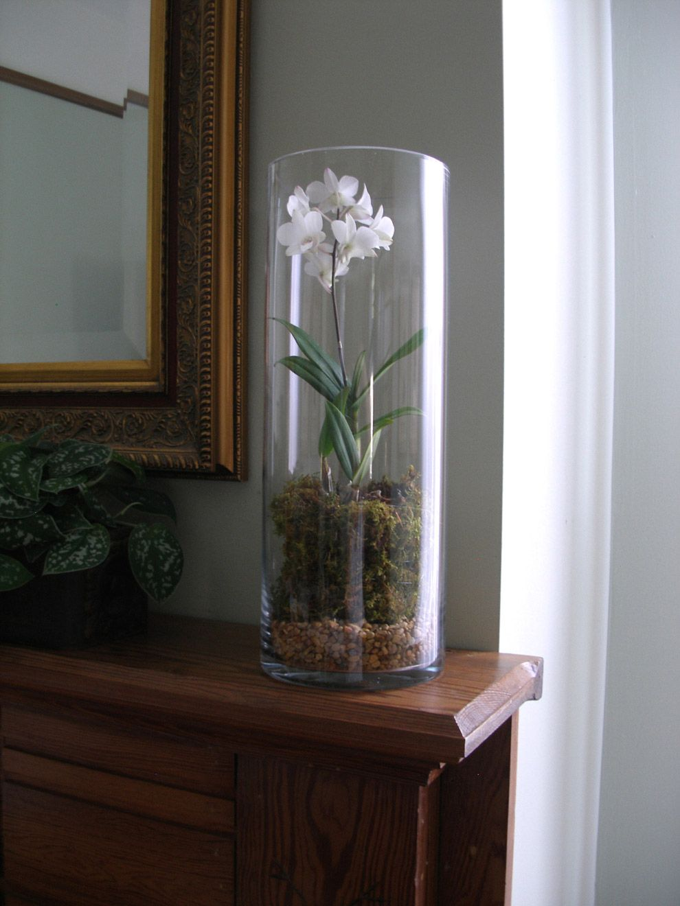 Using Round Cylinder Clear Glass Extra Tall Vase For Orchid