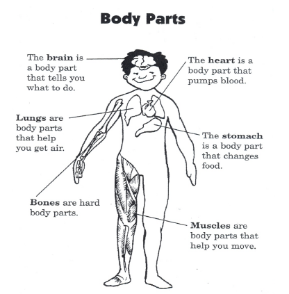 Body parts define each body part bones are hard body parts the body parts define each body part bones are hard body parts the heart is a body part that pumps blood the stomach is a body that changes food ccuart Images