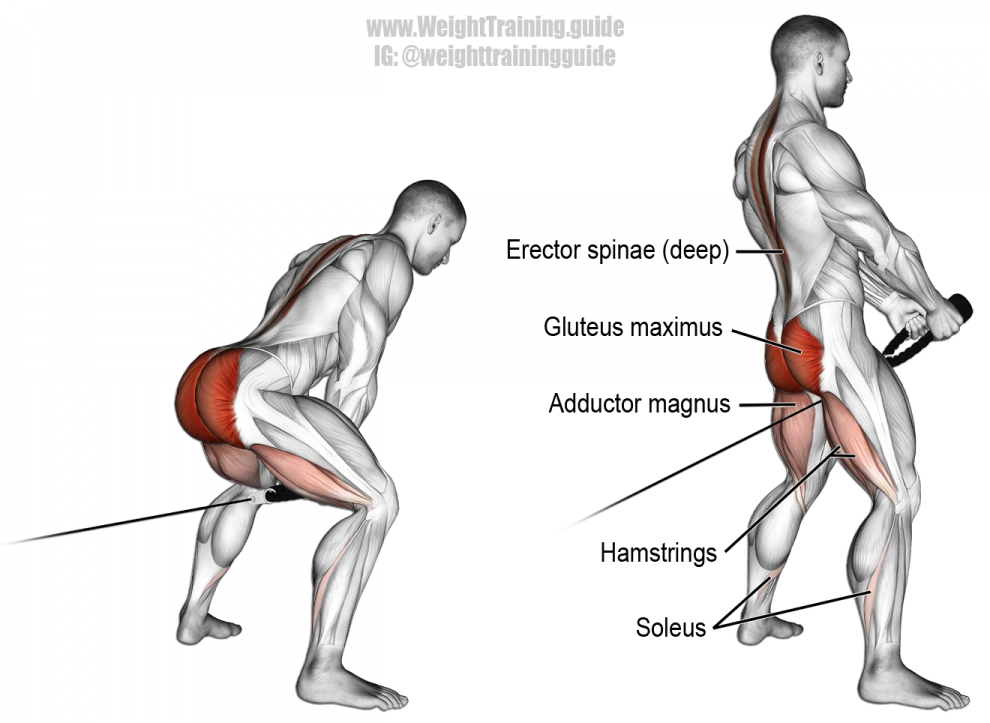 Cable pull-through | Lower body WO | Pinterest | Krafttraining ...