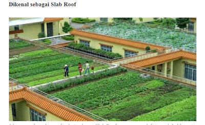 Unik Di Negara Ini, Genteng Rumah Jadi Lahan Pertanian