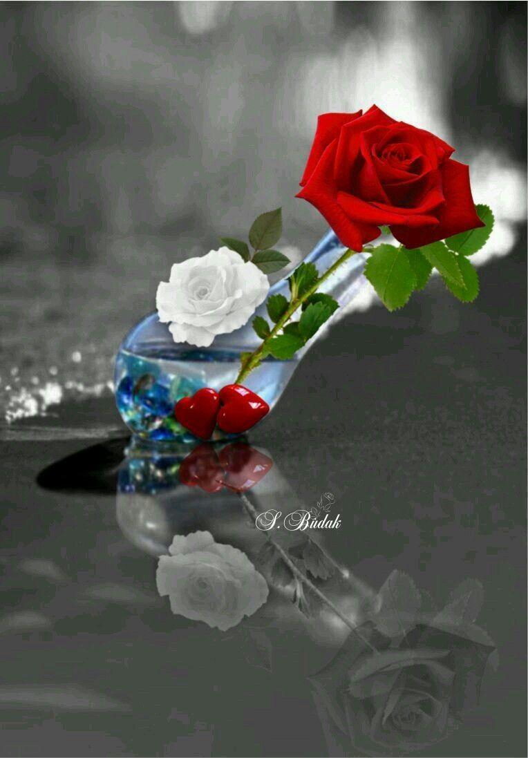 pin von flowers in heart auf colour splash pinterest blumen rosen und bilder. Black Bedroom Furniture Sets. Home Design Ideas