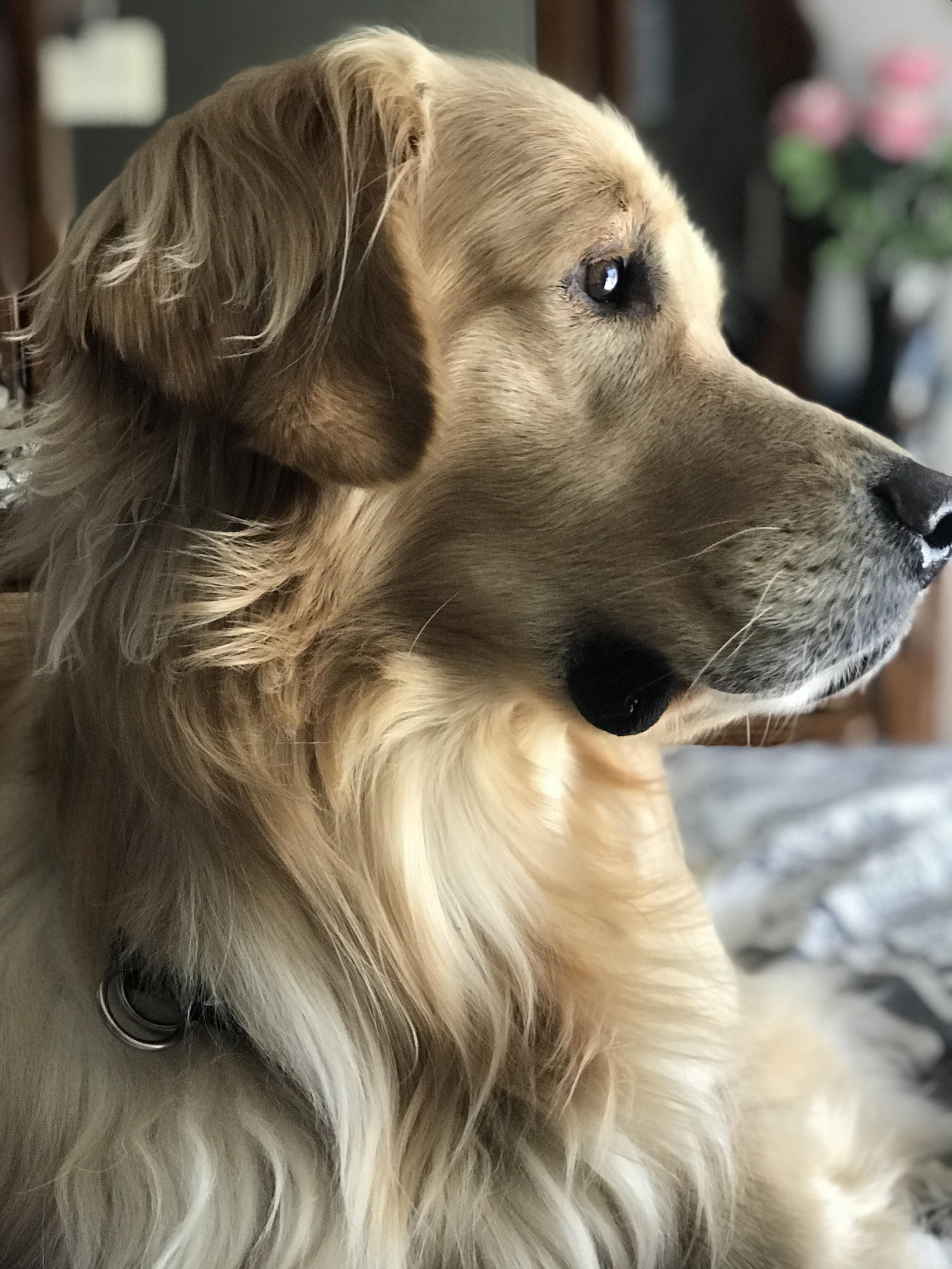 A Very Good And Sincere Fellow Dogpictures Dogs Aww