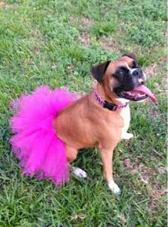 Dog Tutu