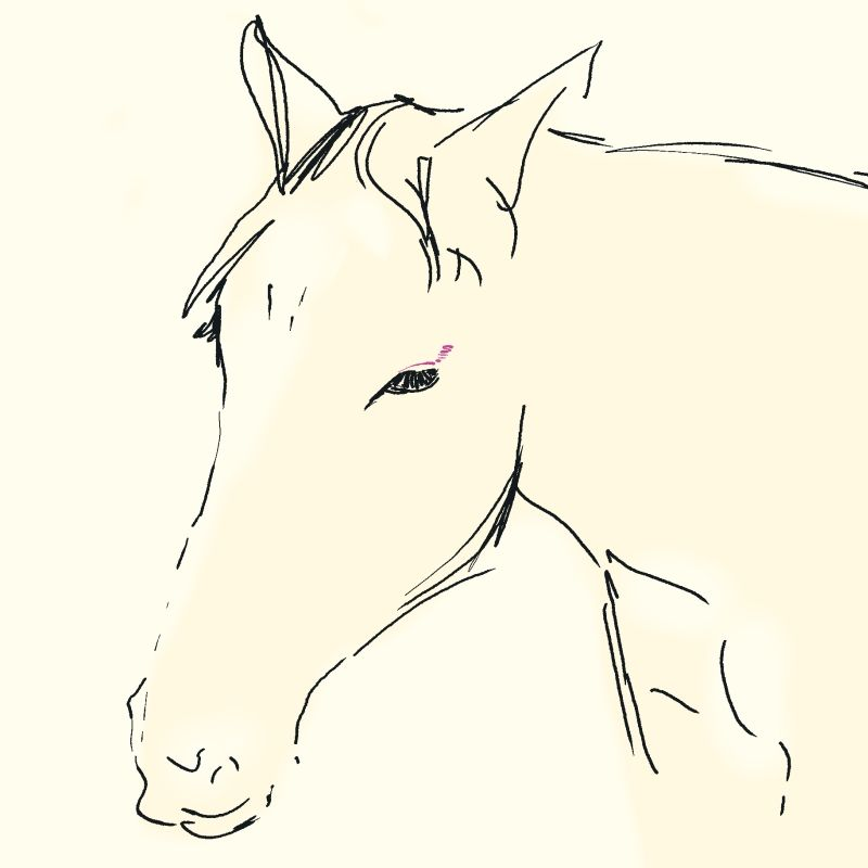 "AOL Image Search result for ""http://www.thousandsketches.com/sketches/0524_horse_w.jpg"""