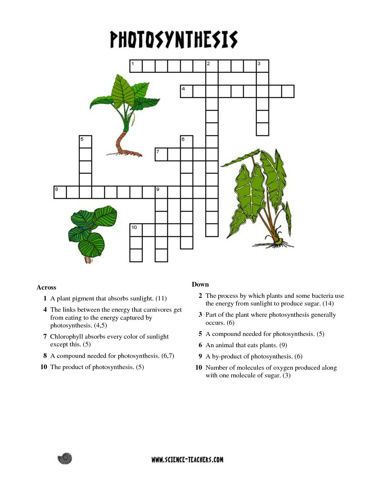 printable photosynthesis crossword Bing Images – Photosynthesis Worksheets Kids