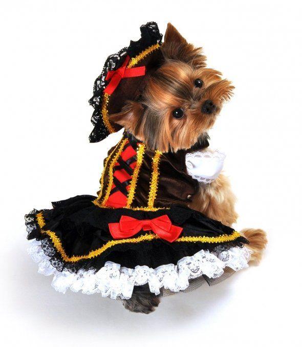 Halloween Costumes For Yorkies Girl Dog Costumes Girl And Dog