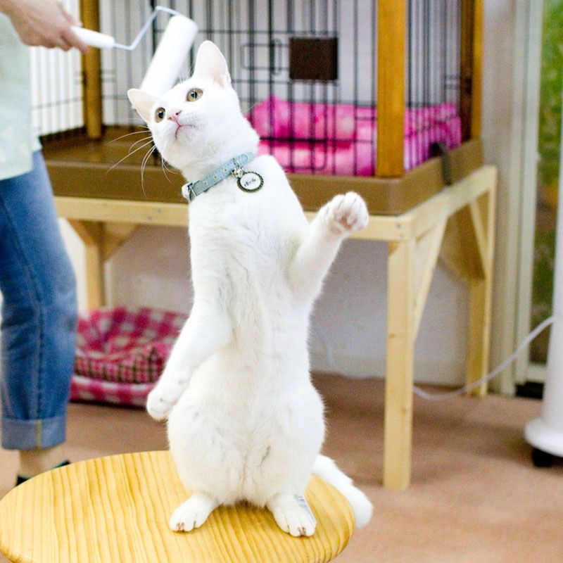 Wazzat? A paint roller? Cat cafe, Cats, Cats and kittens