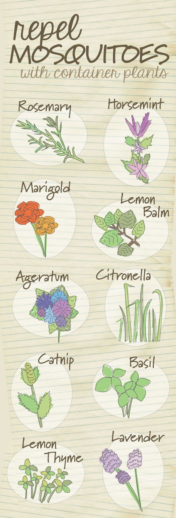 Get rid of the bug spray and repel mosquitos naturally using these plants. | 23 Diagrams That Make Gardening So Much Easier #mosquitoplants