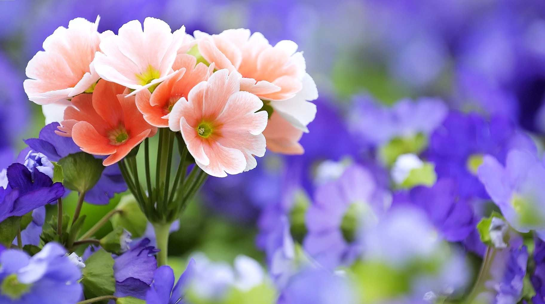 Beautiful Flowers Wallpapers For Desktop Background