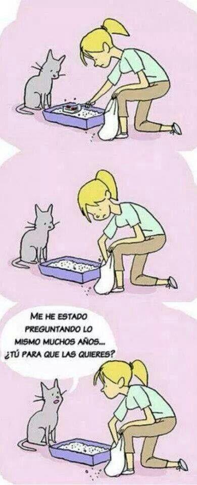 Para que la quiere? Gatos