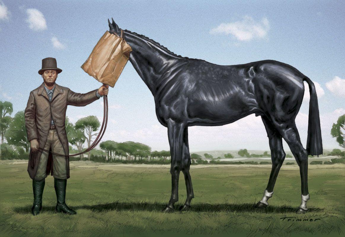 Ugly horse digital ilration for avant card postcard