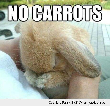 No carrots for sad bunny