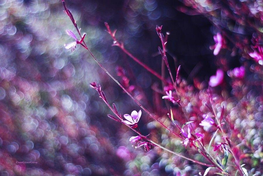 pink world by Onur Güner Güray