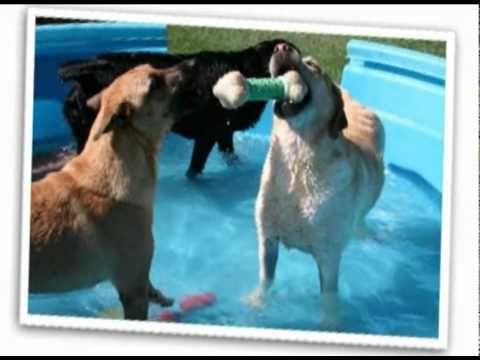 Ruff House Pet Resort Video Tour My Dogs Love Ruff House Pet