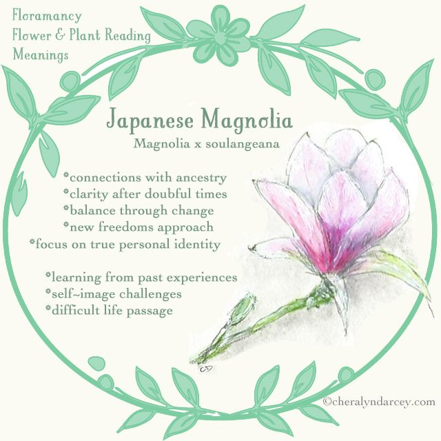 Cheralyn Darcey Flower Reading Oracle Cards Flower Meanings Japanese Magnolia Botanical Flowers