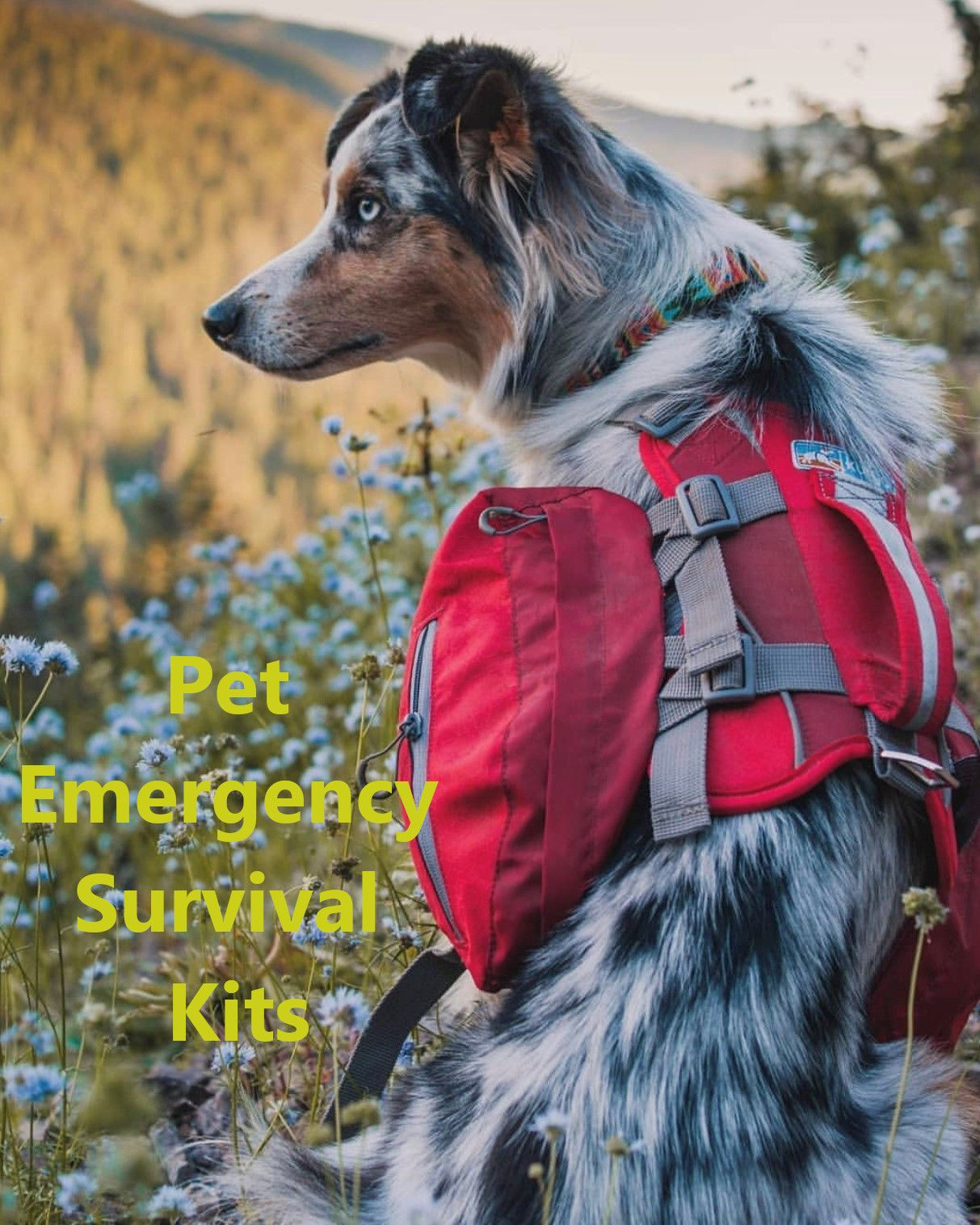Pin by Ebooksy on Survival tips in 2020 (With images