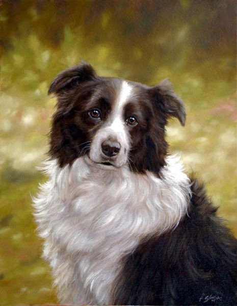 I Love John Silver S Paintings Of Bcs John Silver Border Collie Originals Border Collie Art Dog Paintings Dog Portraits