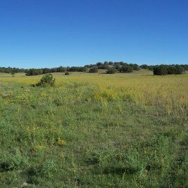 1 47 acres in Apache County, Arizona! Owner financed