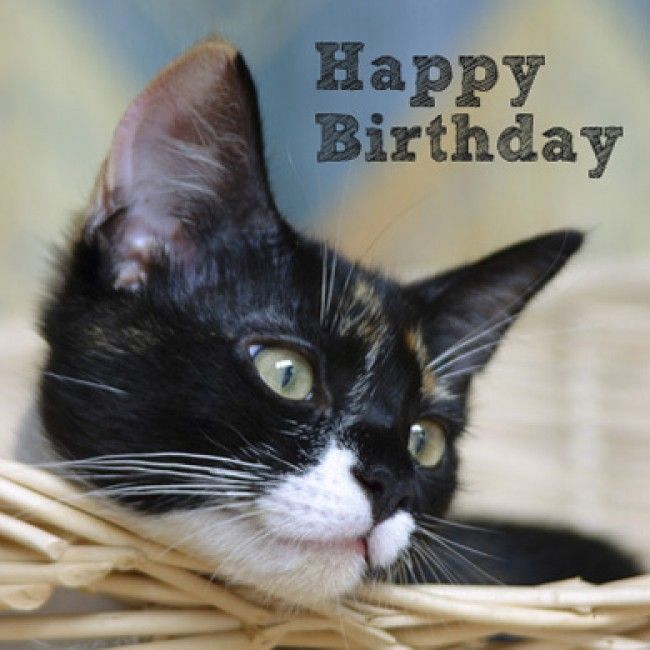 Happy Birthday Cat | ... & Cards > Personalised Cards ...