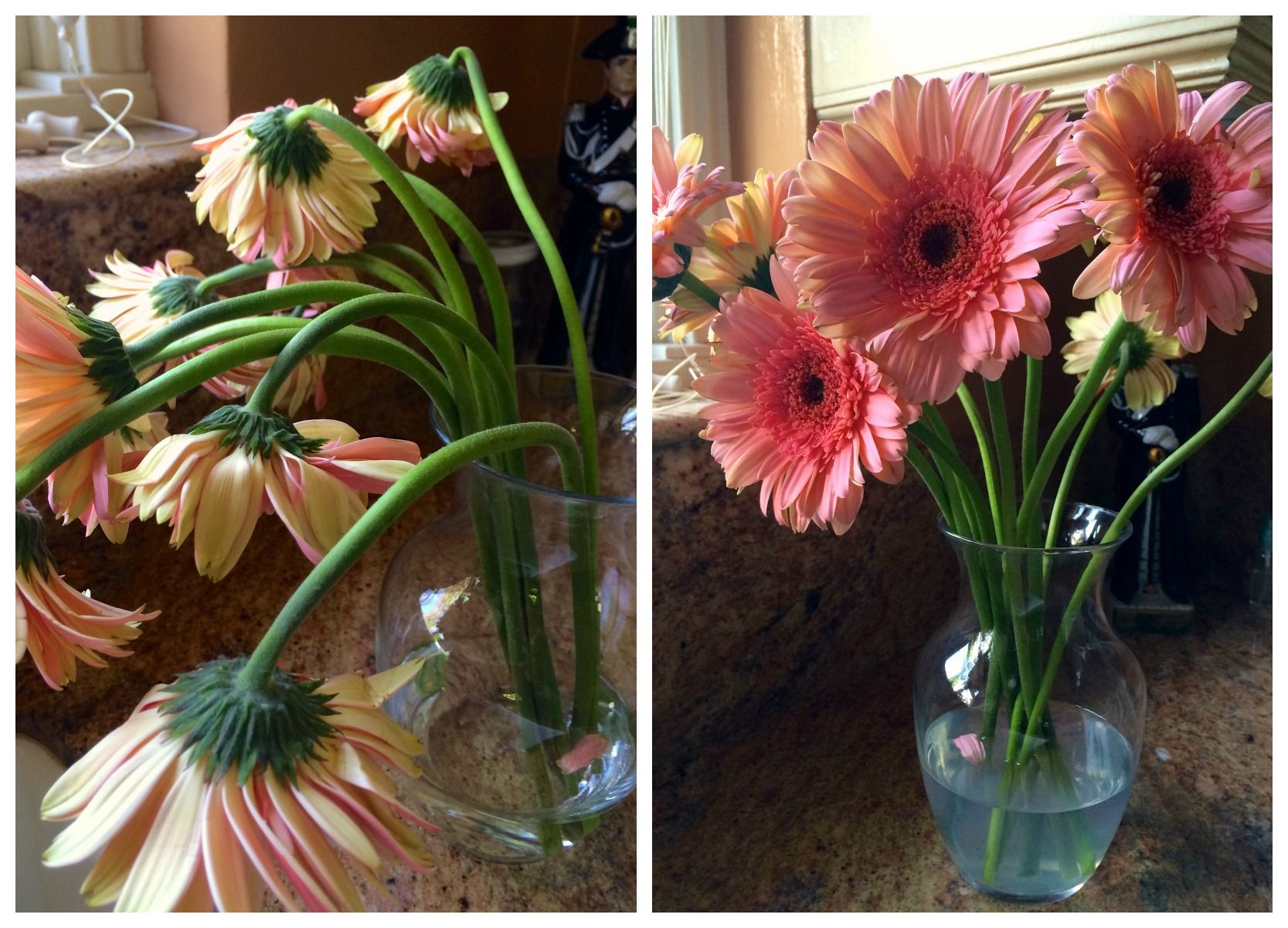 How To Revive Gerbera Daisies Wilted Flowers Gerbera Daisy Gerbera Flower