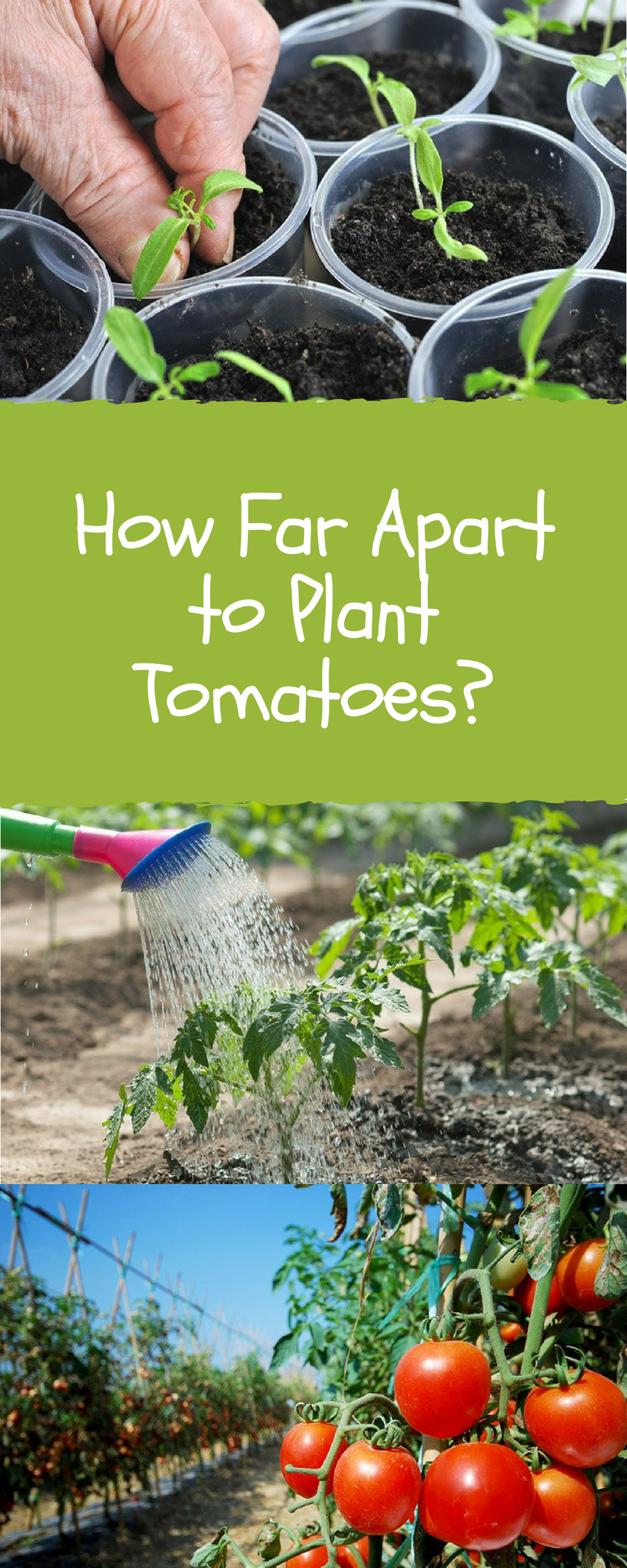 How Far Apart to Plant Tomatoes: Skills You Need (2020 Update) | Gardening for beginners, Tomato ...