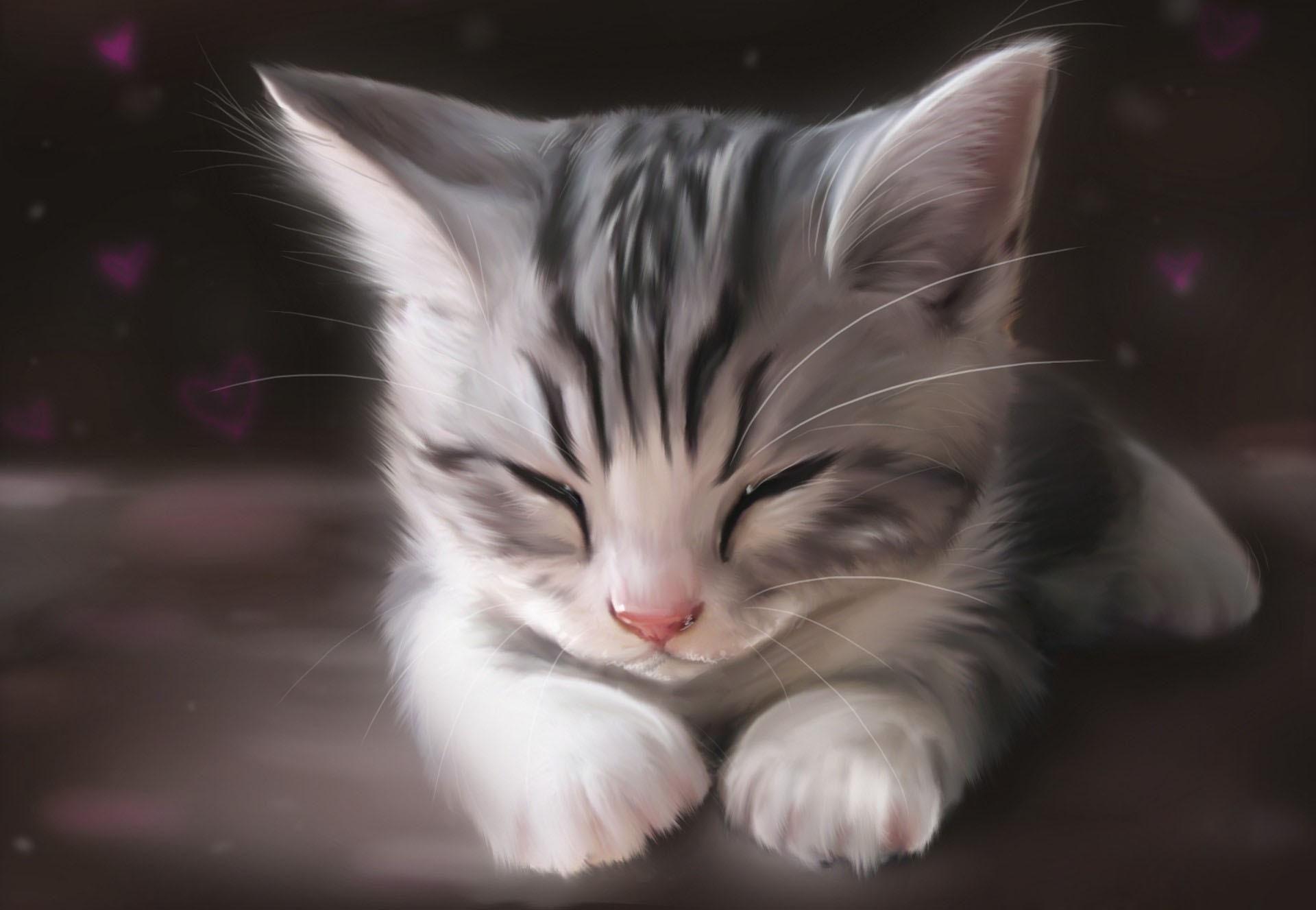 Cute Kitten Sleeping Wallpaper Hewan Hewan Lucu Kucing