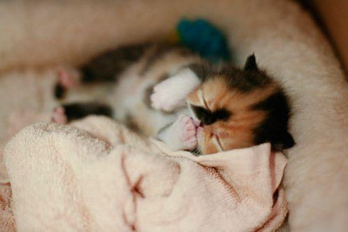 cutest kitten in the world - Google Search
