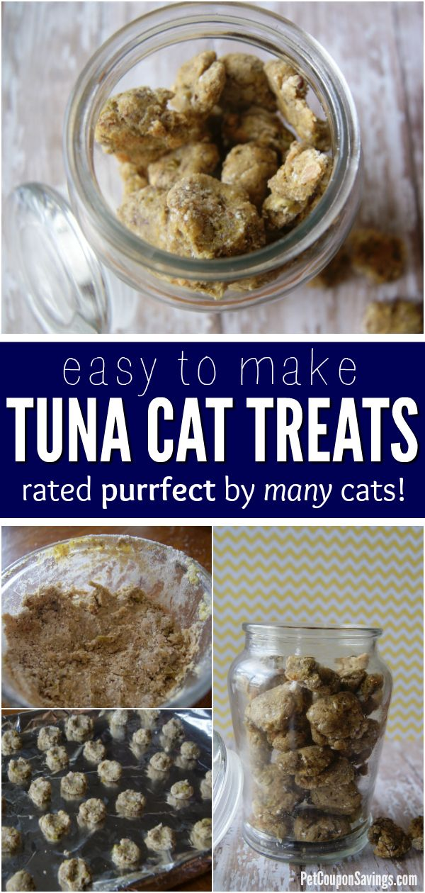 These Tuna Cat Treats are SO easy to make! Plus, they are