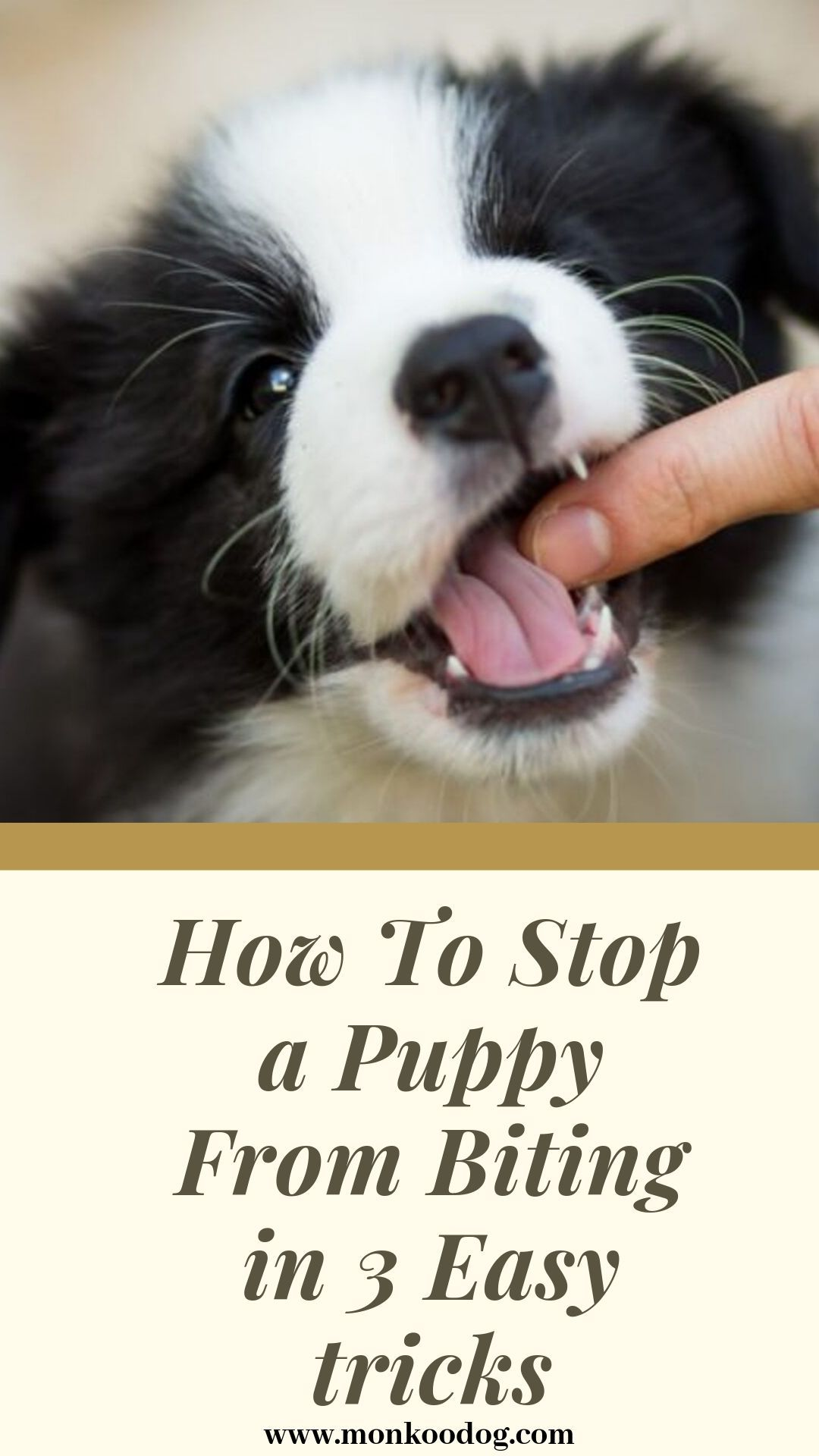 How To Stop A Puppy From Bitting In 3 Easy Tricks Stop Puppy From Biting Puppy Biting Puppies
