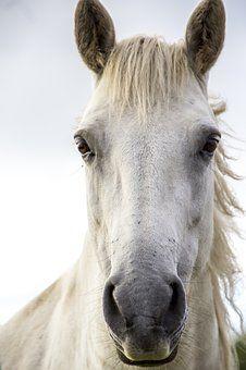 Impression Cheval Cheval Blanc Photographie Equestre Image Cheval Cheval