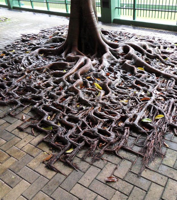 Die Wurzeln Dieses Baumes Haben Sich Dem Muster Der