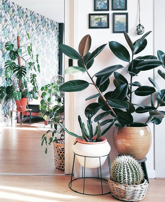 60+ Plant Stand Design Ideas for Indoor Houseplants is part of Houseplants indoor - When it comes to popular home decorations for your apartment or home, there are a number of options to select, but we can't think of indoor plants  Indoor plants are incredibly popular indoor decorations  They come with a range of benefits that are easier to maintain, provide health benefits and can be utilized in lots of tropical decorating themes  House plants act as air purifiers and can clear the air  Indoor plants bring a room to life—especially during the winter months  The idea of how to display indoor plants in indoor plants is as follows  No matter how modern your apartment is, or vice versa   it comes with vintage or antique furniture, it takes your personal style and some freshness  In addition, indoor plants make your house look more expensive  We have compiled a number of photos giving you ideas on how to make your indoor plants look better  Hope you will get some inspiration from these ideas