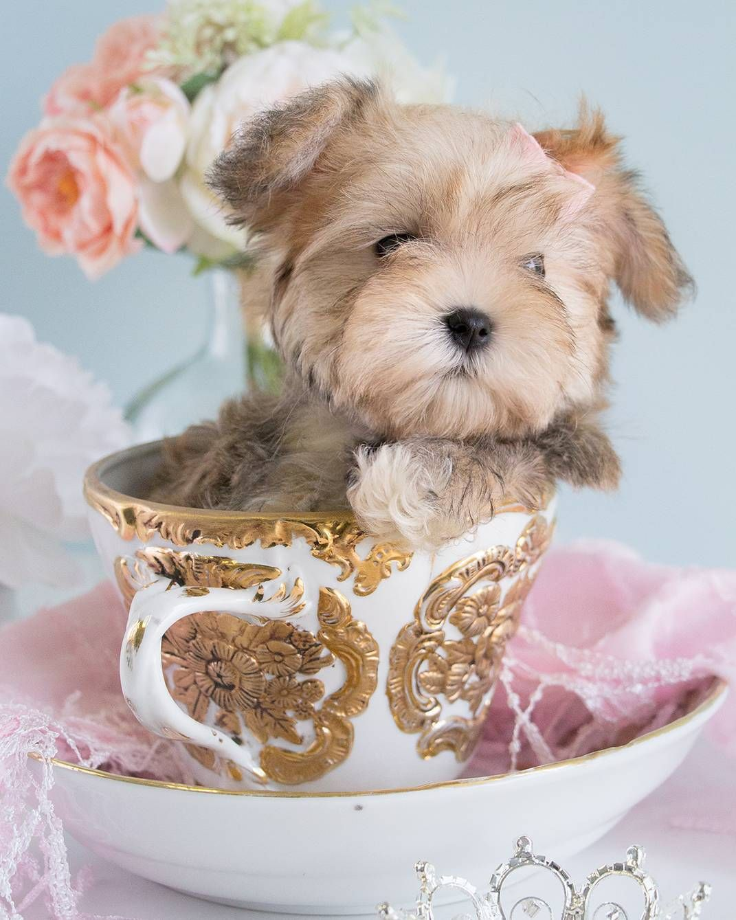 25 Teddy Bear Dog Breeds Cutest Dogs You Ever See