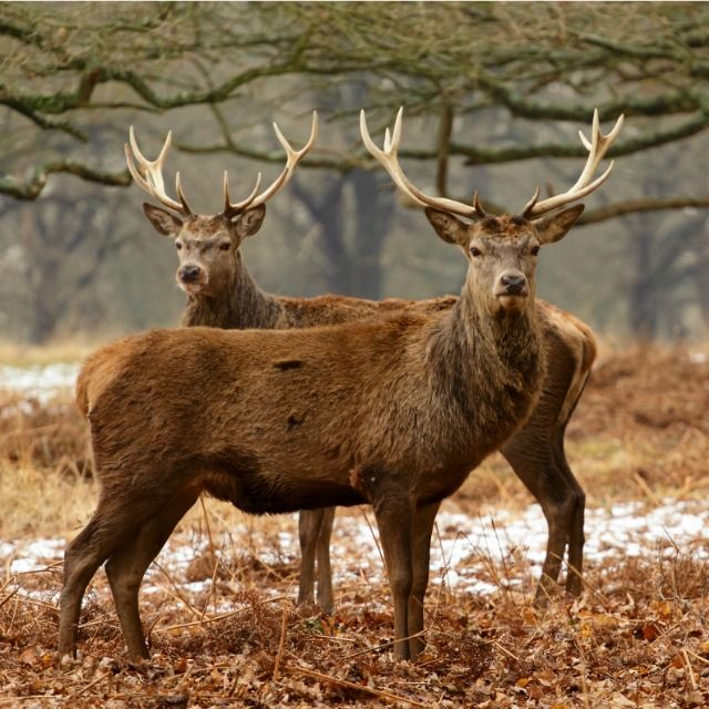 Top 5 Cellular Game Cameras Wildlife photography, Nature