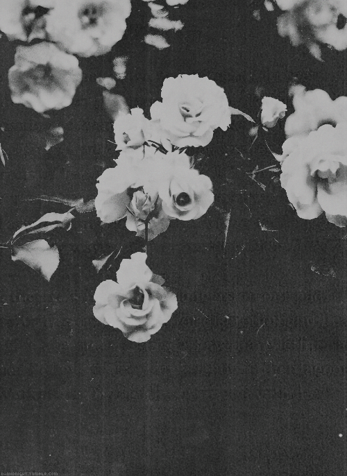 Black And White Tumblr Google Search Flowers Black Background Black Background Painting Tumblr Flower