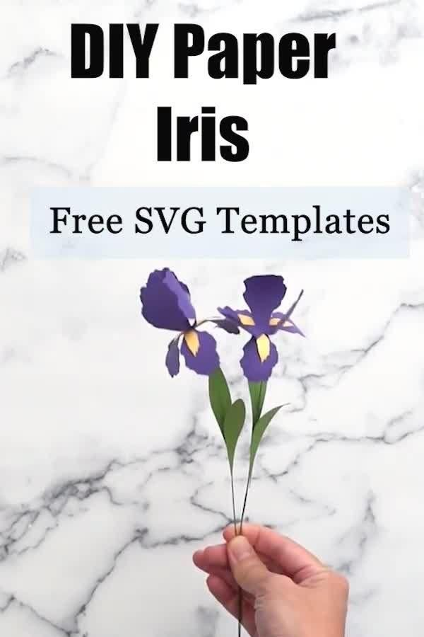 Paper Iris Template Domestic Heights Video Video In 2020 Free Paper Flower Templates Paper Flower Template Flower Template