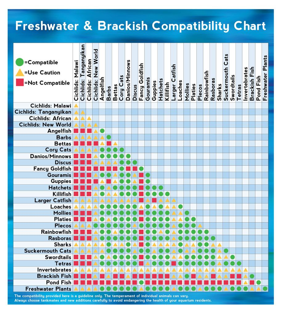 freshwater and brackish fish compatibility chart