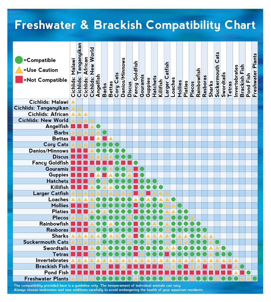 Salt Water Fish Compatibility