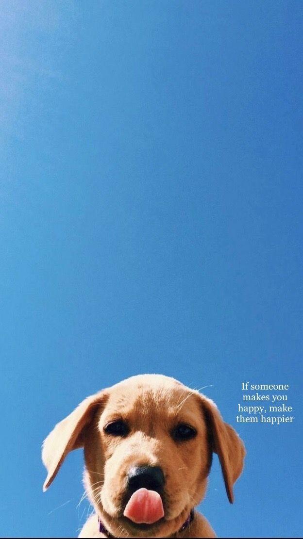 Idea By Katie Aufdenspring On Animals In 2020 Super Cute Puppies