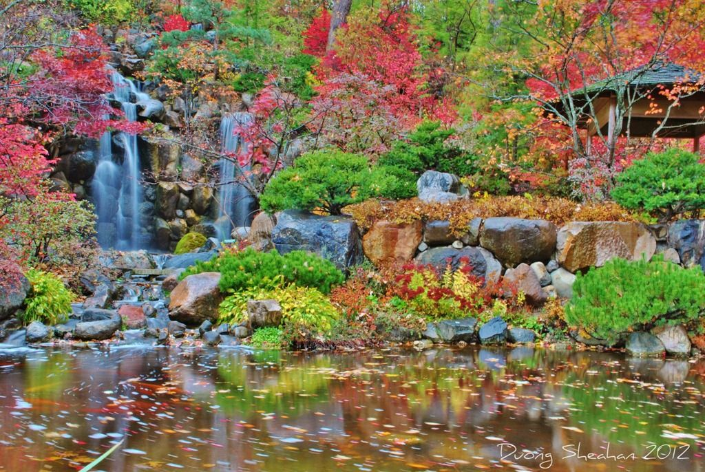 Gorgeous At Anderson Japanese Gardens Right Now Leaves Will Fall